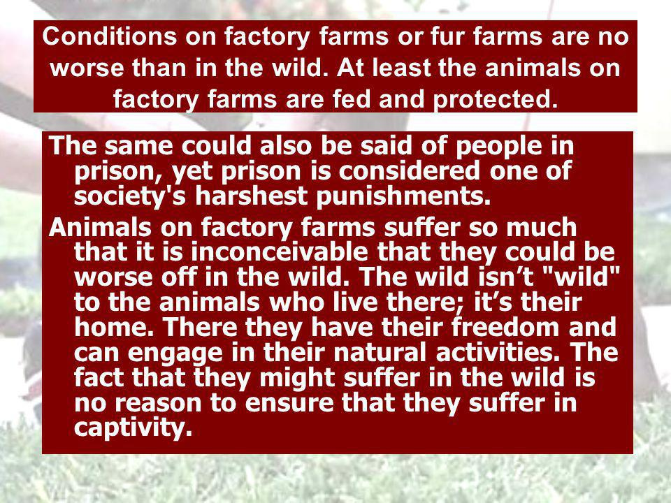 Trapping is inhumane, but what about fur ranches? On fur