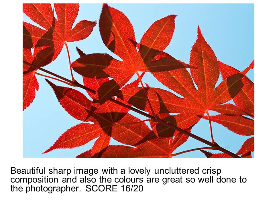 Beautiful sharp image with a lovely uncluttered crisp composition and also the colours are great so well done to the photographer. SCORE 16/20