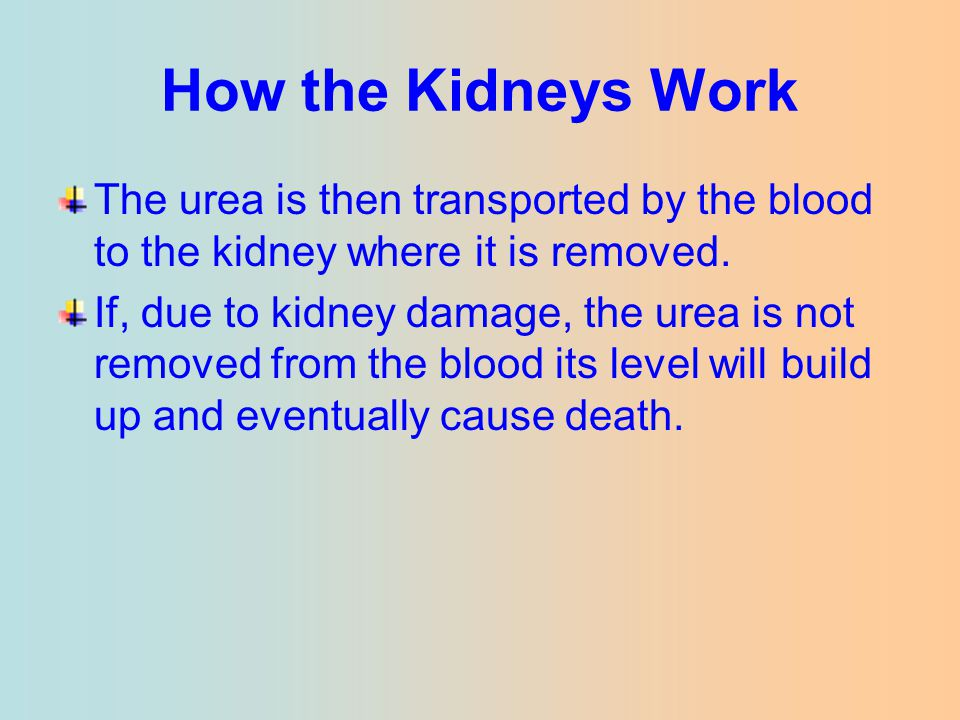 How the Kidneys Work The urea is then transported by the blood to the kidney where it is removed. If, due to kidney damage, the urea is not removed fr