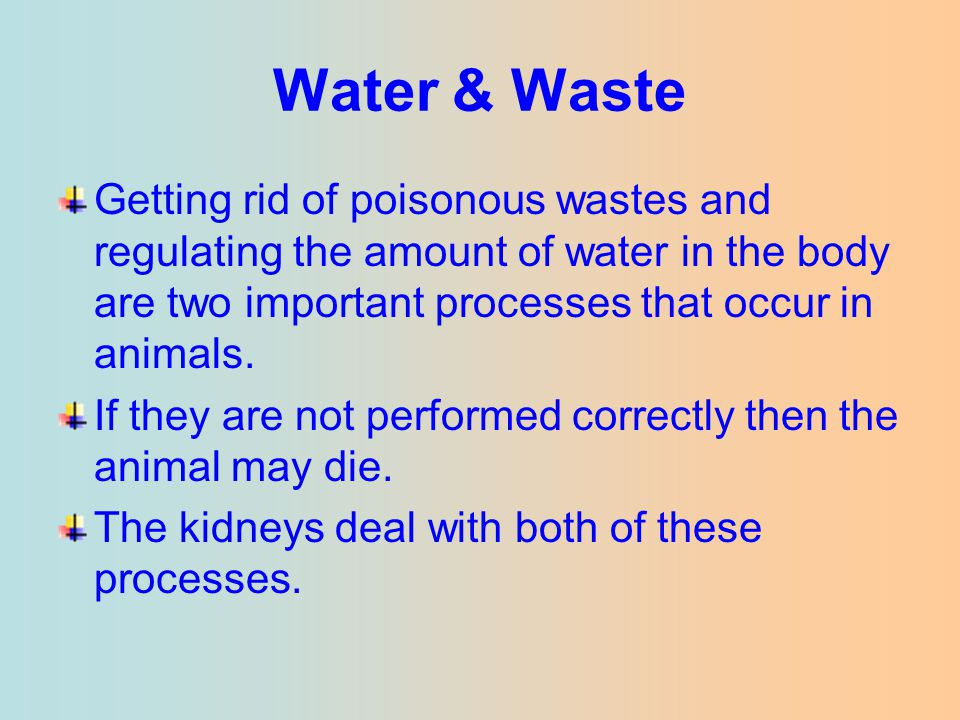 Getting rid of poisonous wastes and regulating the amount of water in the body are two important processes that occur in animals. If they are not perf