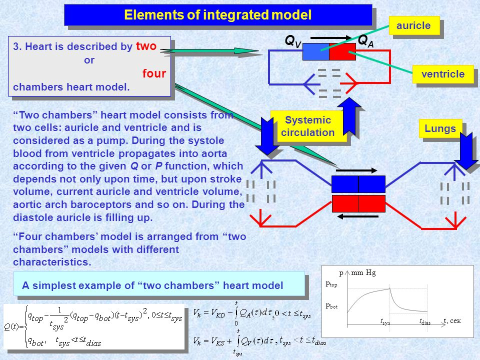 Elements of integrated model 3. Heart is described by two or four chambers heart model. 3. Heart is described by two or four chambers heart model. Lun