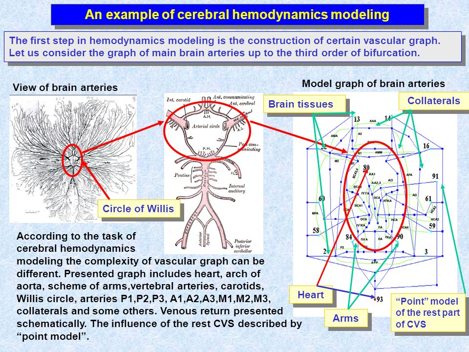 Model graph of brain arteries View of brain arteries An example of cerebral hemodynamics modeling The first step in hemodynamics modeling is the const