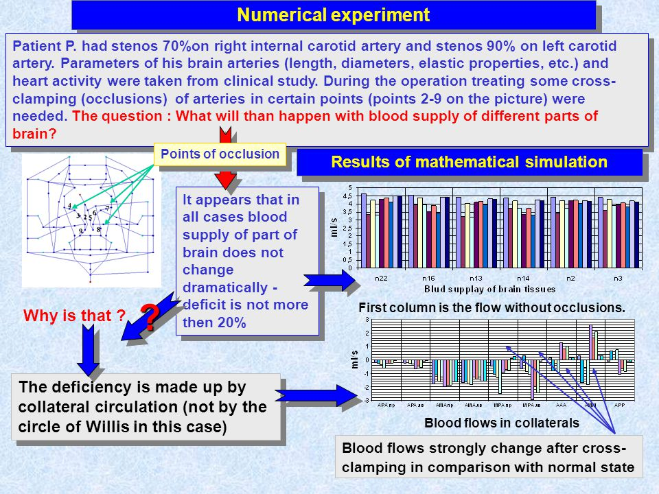 Numerical experiment Patient P. had stenos 70%on right internal carotid artery and stenos 90% on left carotid artery. Parameters of his brain arteries