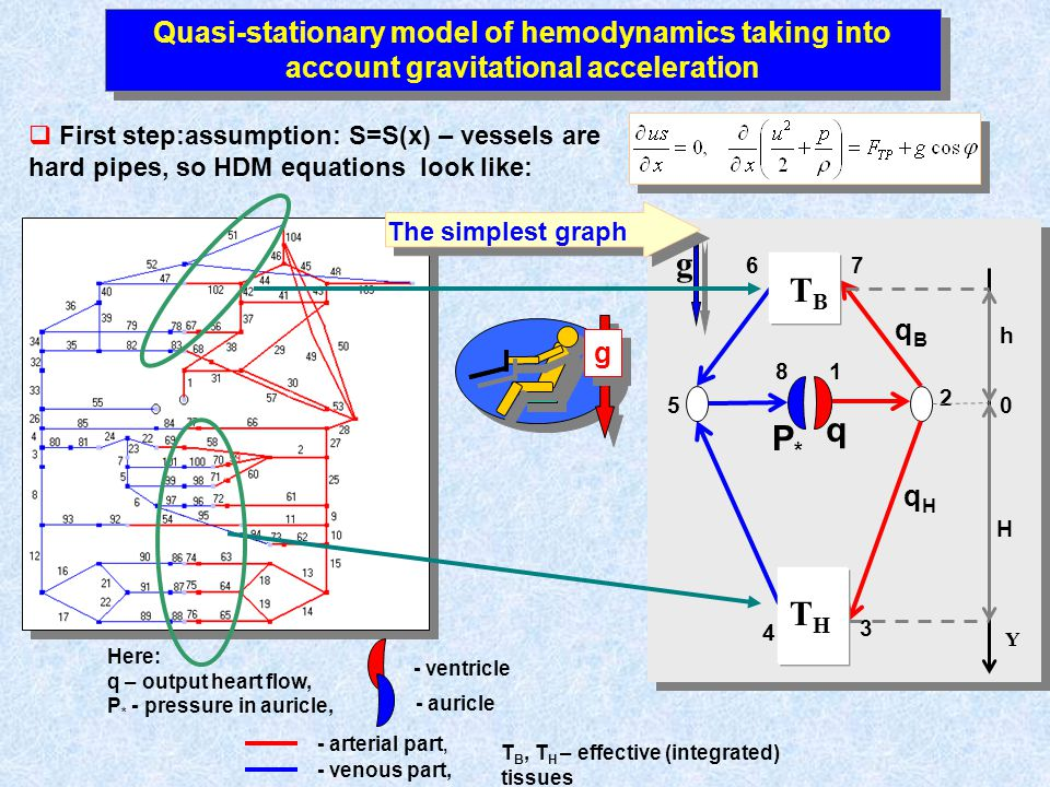 Quasi-stationary model of hemodynamics taking into account gravitational acceleration First step:assumption: S=S(x) – vessels are hard pipes, so HDM e