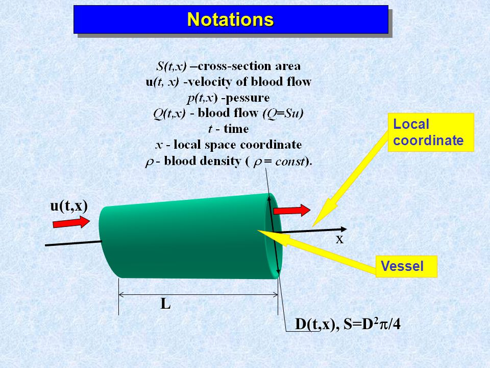 NotationsNotations x u(t,x) L D(t,x), S=D 2 /4 Vessel Local coordinate