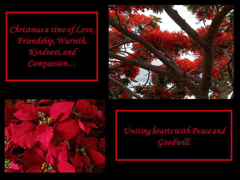 Poinsettia Tree Christmas is Love