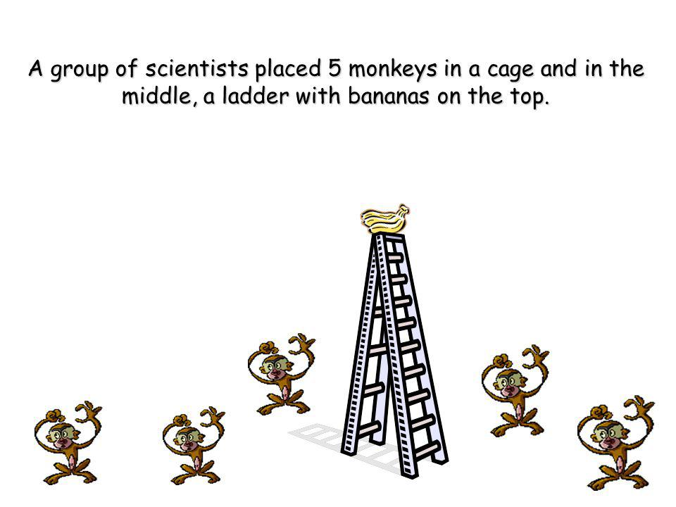 A group of scientists placed 5 monkeys in a cage and in the middle, a ladder with bananas on the top.