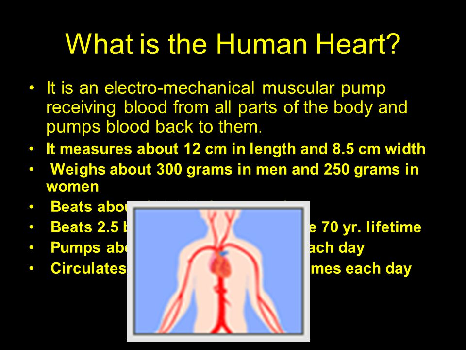What is the Human Heart? It is an electro-mechanical muscular pump receiving blood from all parts of the body and pumps blood back to them. It measure
