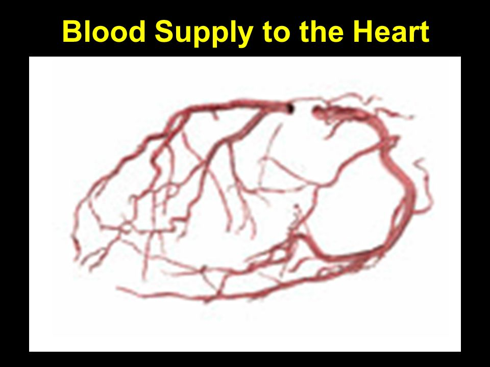 Blood Supply to the Heart Heart is supplied by coronary arteries. They have their origin just above the aortic root. [Aortic root is the area of the a