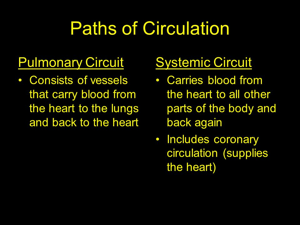 Pulmonary Circuit Consists of vessels that carry blood from the heart to the lungs and back to the heart Systemic Circuit Carries blood from the heart