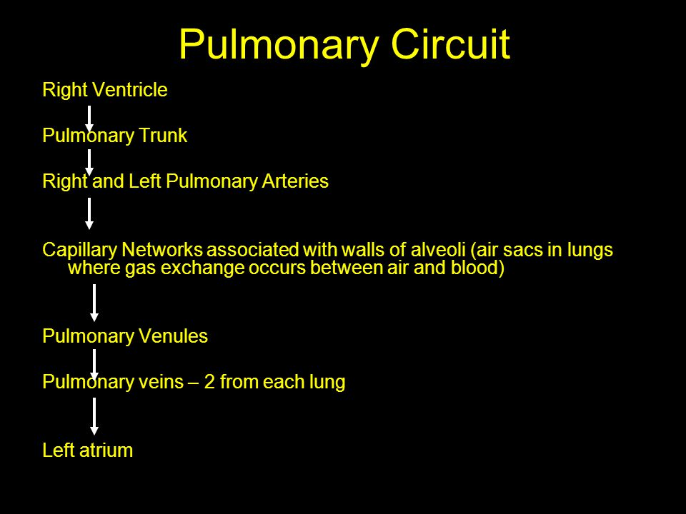 Pulmonary Circuit Right Ventricle Pulmonary Trunk Right and Left Pulmonary Arteries Capillary Networks associated with walls of alveoli (air sacs in l