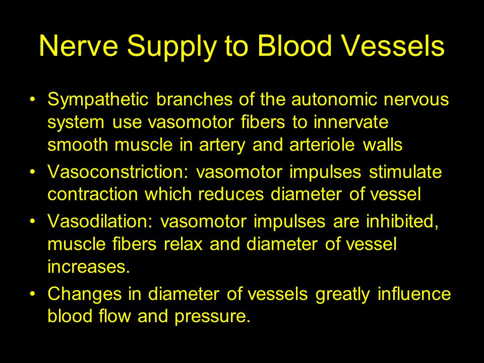 Nerve Supply to Blood Vessels Sympathetic branches of the autonomic nervous system use vasomotor fibers to innervate smooth muscle in artery and arter