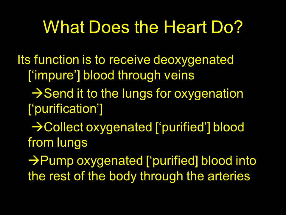 What Does the Heart Do? Its function is to receive deoxygenated [impure] blood through veins Send it to the lungs for oxygenation [purification] Colle