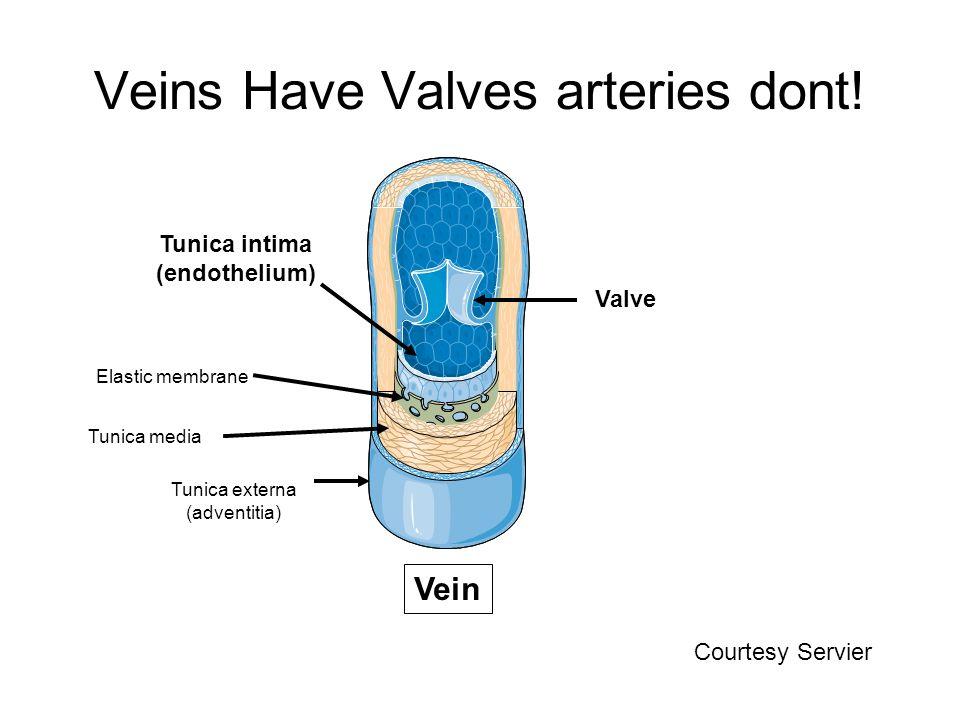 Veins Have Valves arteries dont! Vein Valve Tunica externa (adventitia) Tunica media Tunica intima (endothelium) Elastic membrane Courtesy Servier