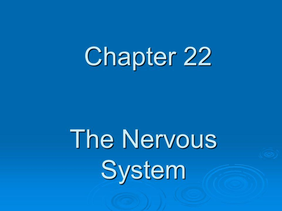The Nervous System Chapter 22
