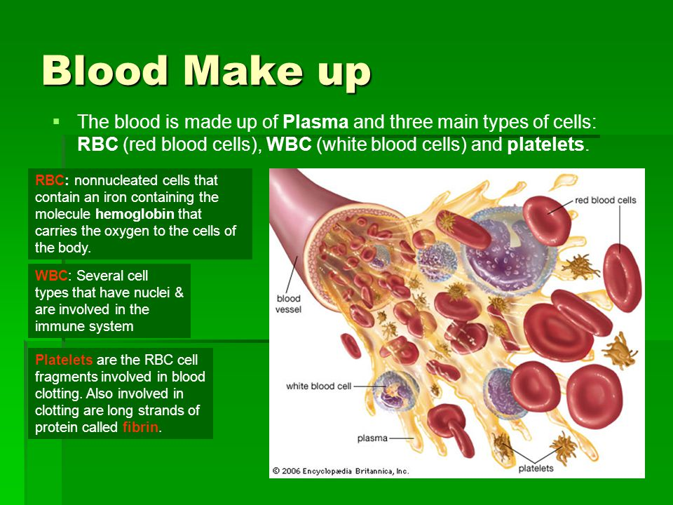 Blood Make up The blood is made up of Plasma and three main types of cells: RBC (red blood cells), WBC (white blood cells) and platelets. RBC: nonnucl