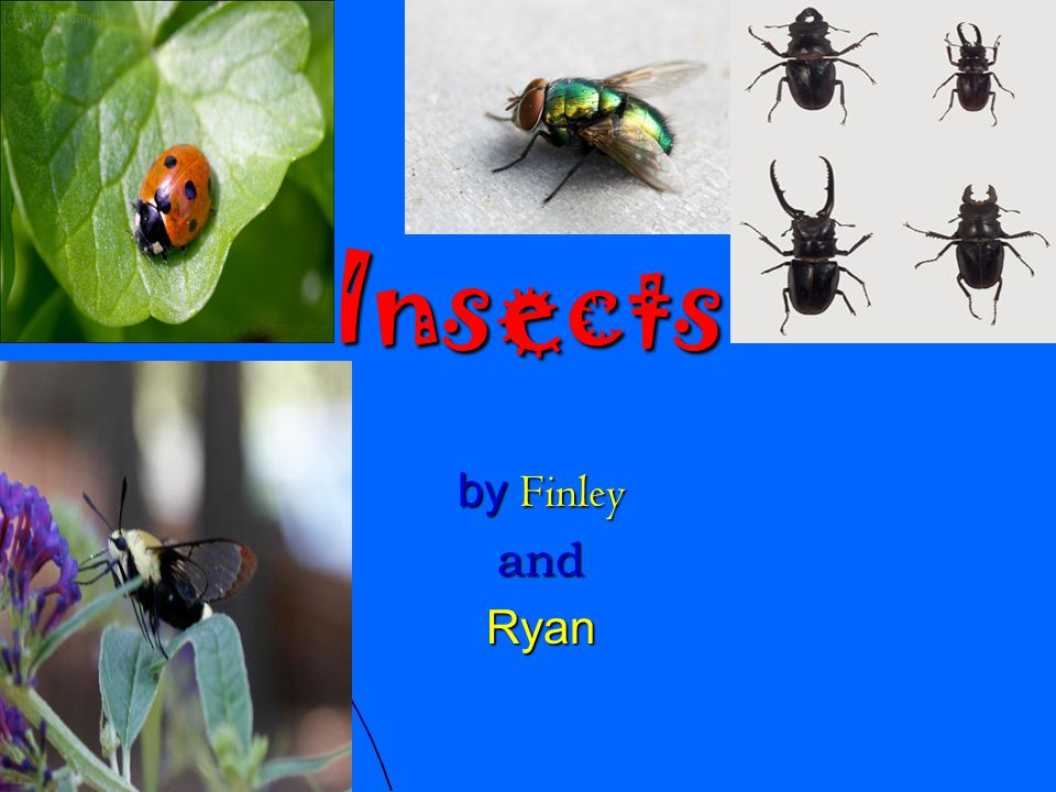 Insects by Finley andRyan
