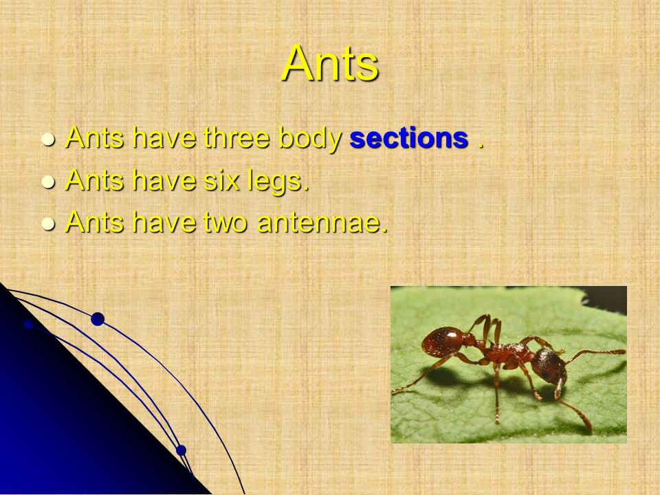 Ants Ants have three body sections. Ants have three body sections. Ants have six legs. Ants have six legs. Ants have two antennae. Ants have two anten