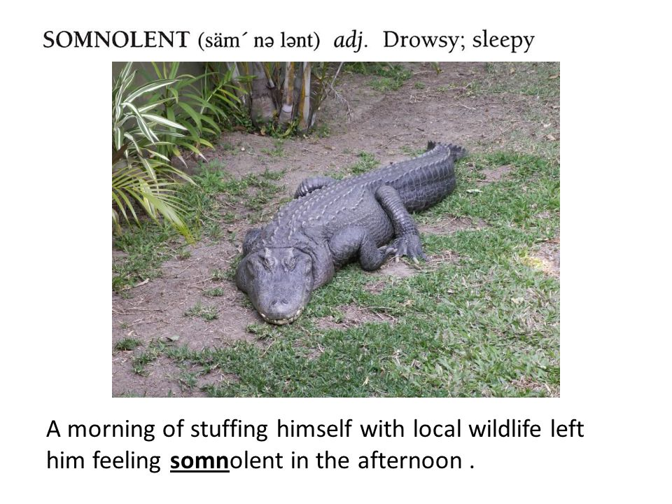 A morning of stuffing himself with local wildlife left him feeling somnolent in the afternoon.