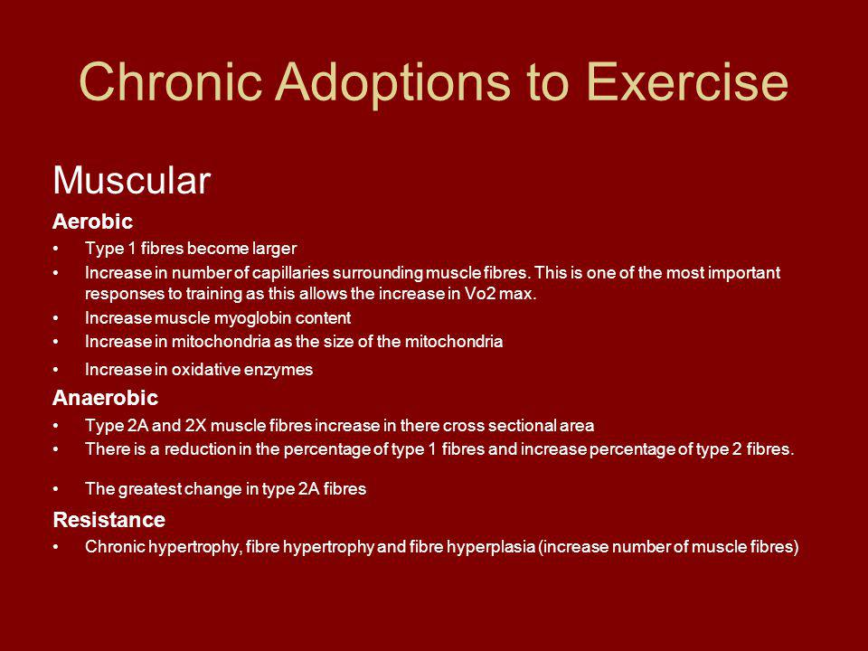 Chronic Adoptions to Exercise Muscular Aerobic Type 1 fibres become larger Increase in number of capillaries surrounding muscle fibres.