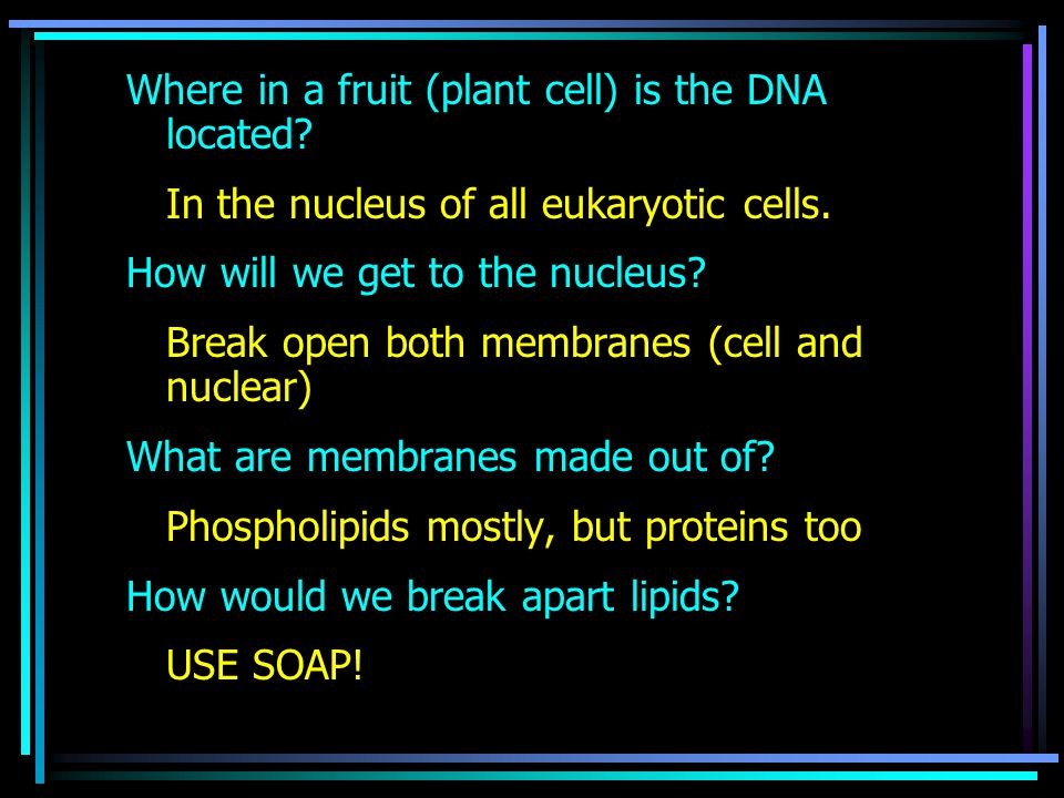 Where in a fruit (plant cell) is the DNA located. In the nucleus of all eukaryotic cells.