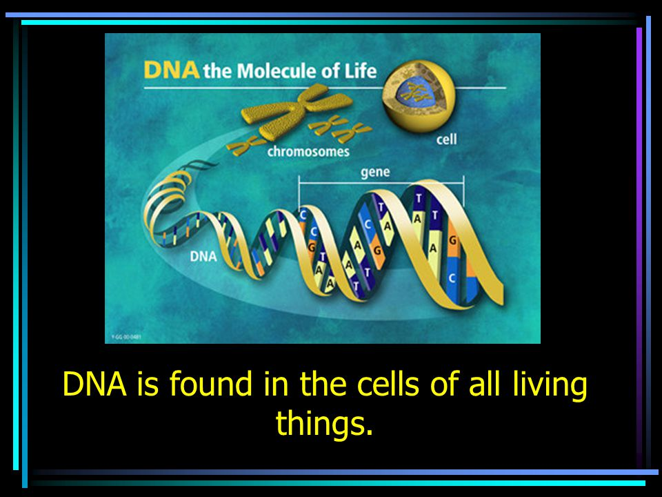 DNA is found in the cells of all living things.