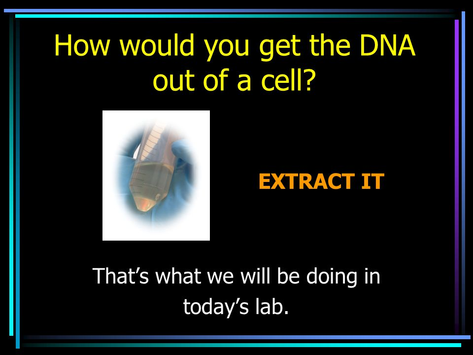 How would you get the DNA out of a cell? Thats what we will be doing in todays lab. EXTRACT IT