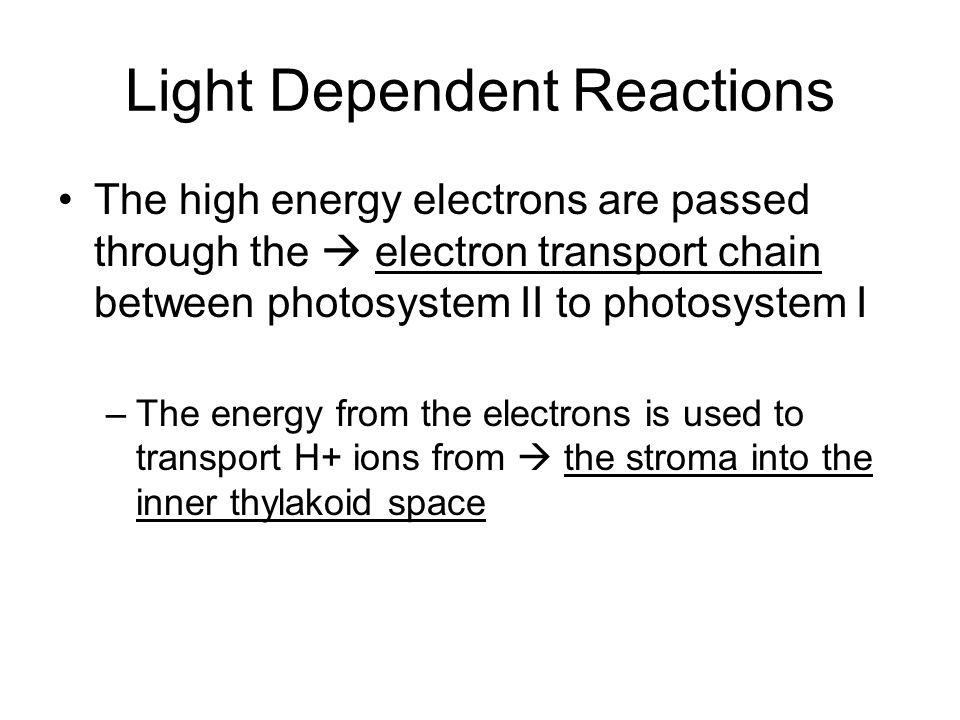 Light Dependent Reactions The high energy electrons are passed through the electron transport chain between photosystem II to photosystem I –The energ