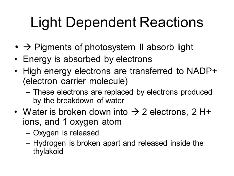 Light Dependent Reactions Pigments of photosystem II absorb light Energy is absorbed by electrons High energy electrons are transferred to NADP+ (elec