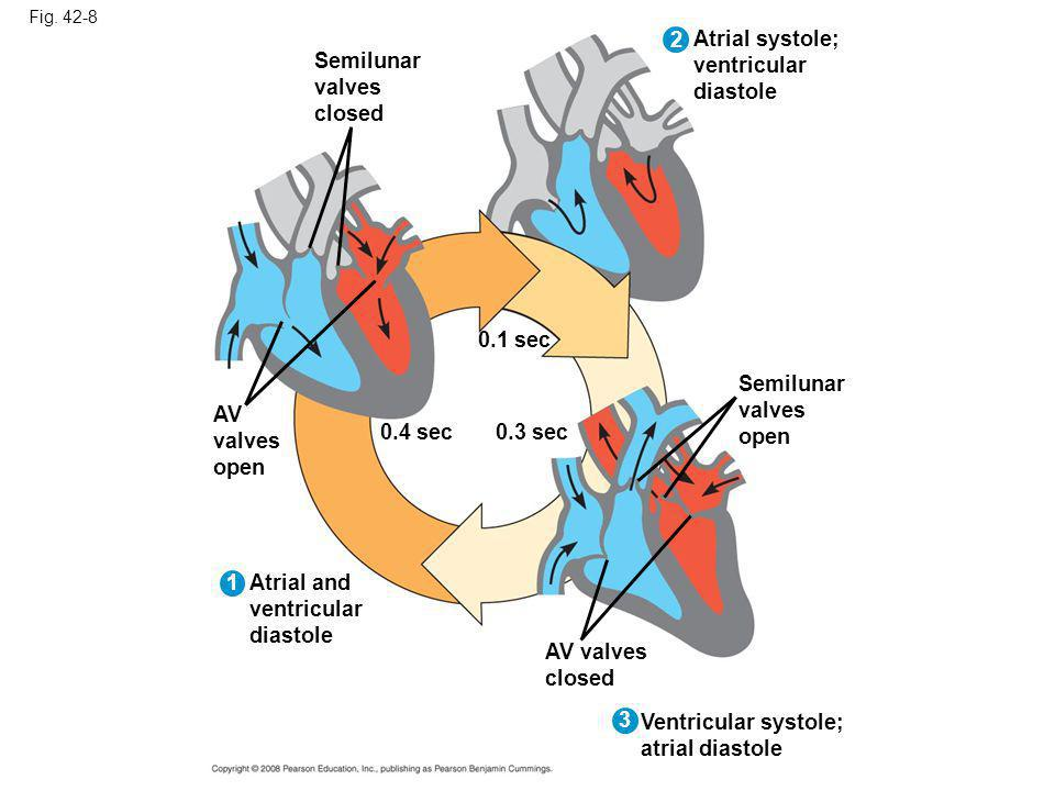 Fig. 42-8 Semilunar valves closed 0.4 sec AV valves open Atrial and ventricular diastole 1 2 0.1 sec Atrial systole; ventricular diastole 3 0.3 sec Se