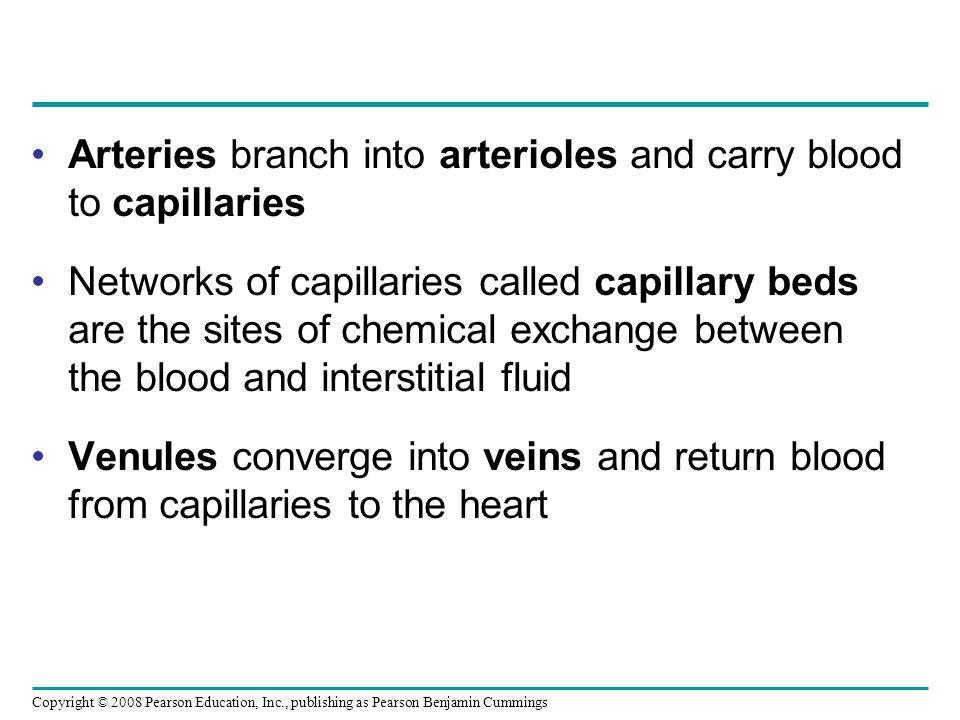 Copyright © 2008 Pearson Education, Inc., publishing as Pearson Benjamin Cummings Arteries branch into arterioles and carry blood to capillaries Networks of capillaries called capillary beds are the sites of chemical exchange between the blood and interstitial fluid Venules converge into veins and return blood from capillaries to the heart