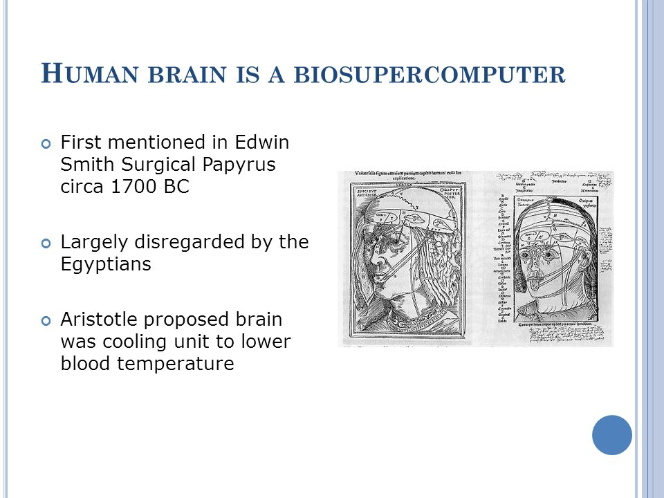 H UMAN BRAIN IS A BIOSUPERCOMPUTER First mentioned in Edwin Smith Surgical Papyrus circa 1700 BC Largely disregarded by the Egyptians Aristotle propos