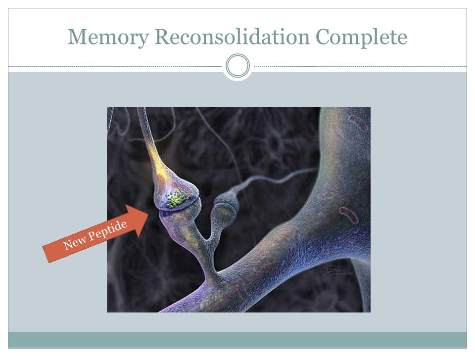 Memory Reconsolidation Complete New Peptide
