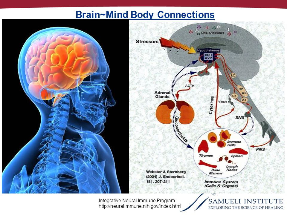 Integrative Neural Immune Program http://neuralimmune.nih.gov/index.html Brain~Mind Body Connections