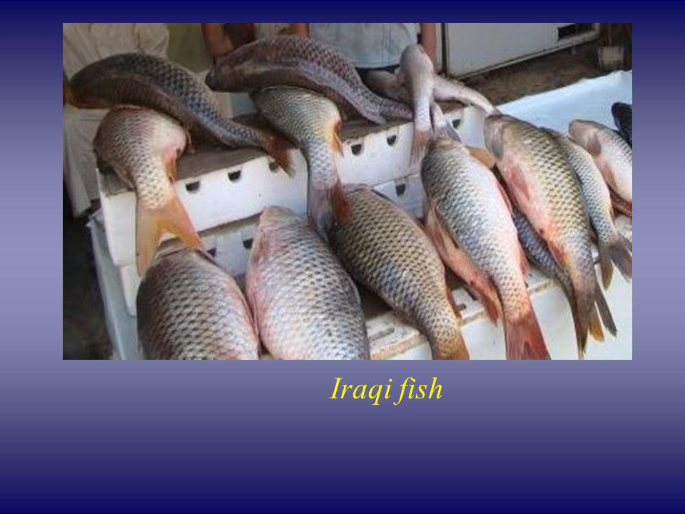 Iraqi fish