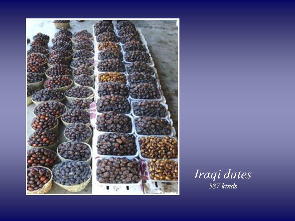 Iraqi dates 587 kinds