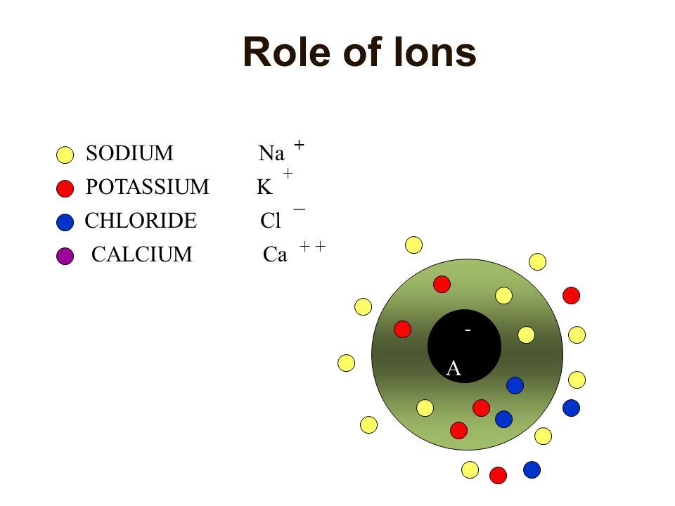 IONIC DISTRIBUTION IonsInside cellOutside cellEquilibrium Potential Sodium15.0150.0+55mV Potassium150.05.5-75mV Chloride9.0125.0-69mV Organic Anions 3