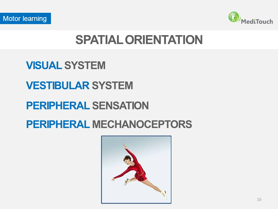 SPATIAL ORIENTATION VISUAL SYSTEM PERIPHERAL MECHANOCEPTORS VESTIBULAR SYSTEM Motor learning PERIPHERAL SENSATION 16