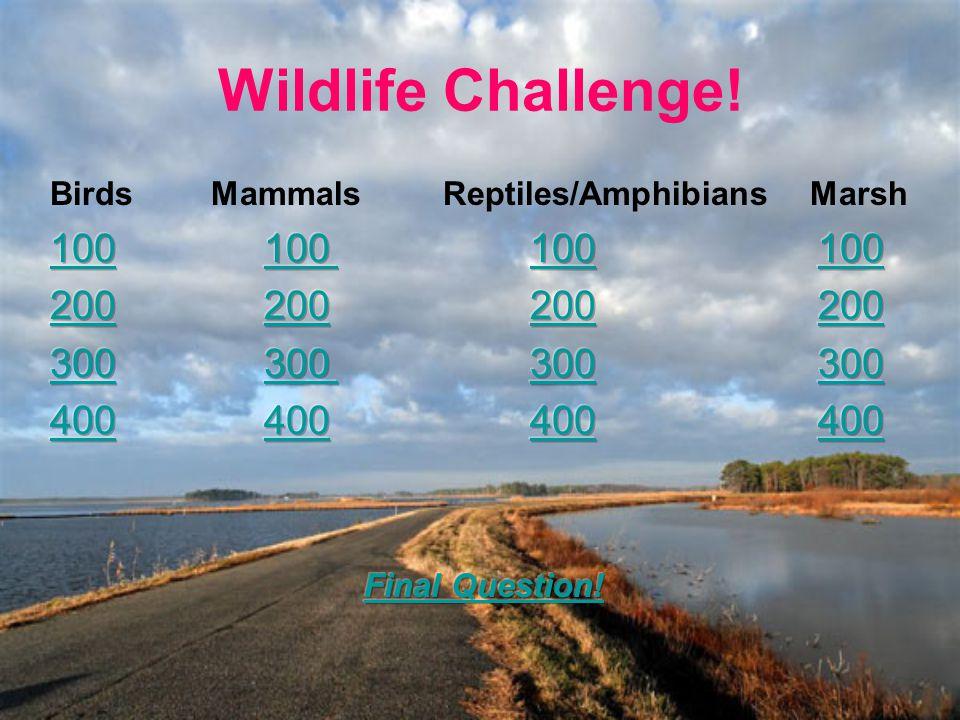 Wildlife Challenge!