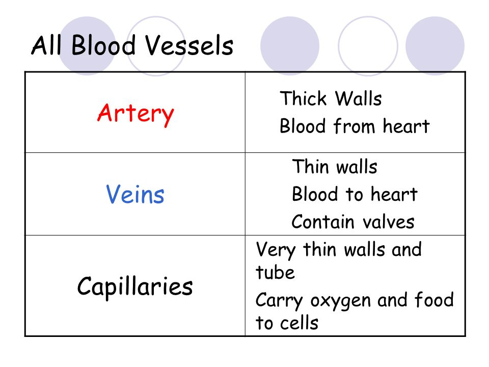 CAPILLARIES carry blood between arteries and veins wall only one cell thick very narrow central tube