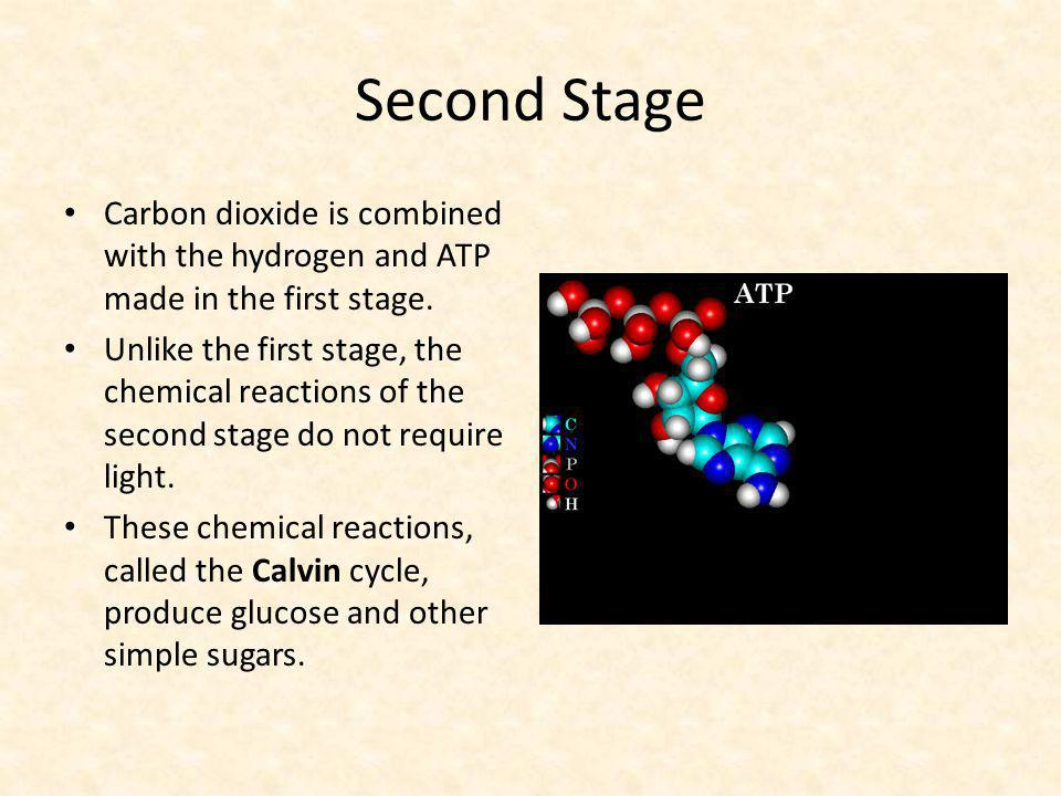 Second Stage Carbon dioxide is combined with the hydrogen and ATP made in the first stage. Unlike the first stage, the chemical reactions of the secon