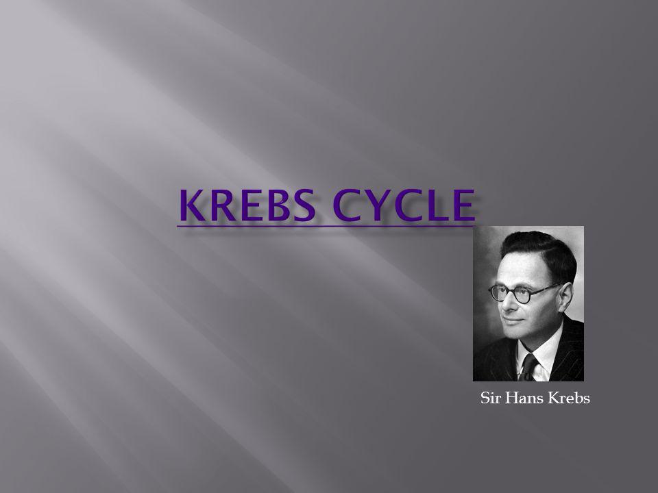 Sir Hans Krebs