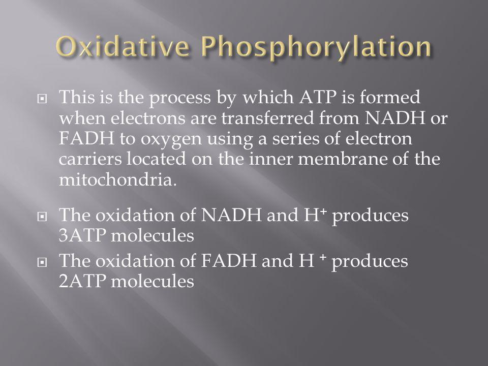 This is the process by which ATP is formed when electrons are transferred from NADH or FADH to oxygen using a series of electron carriers located on t