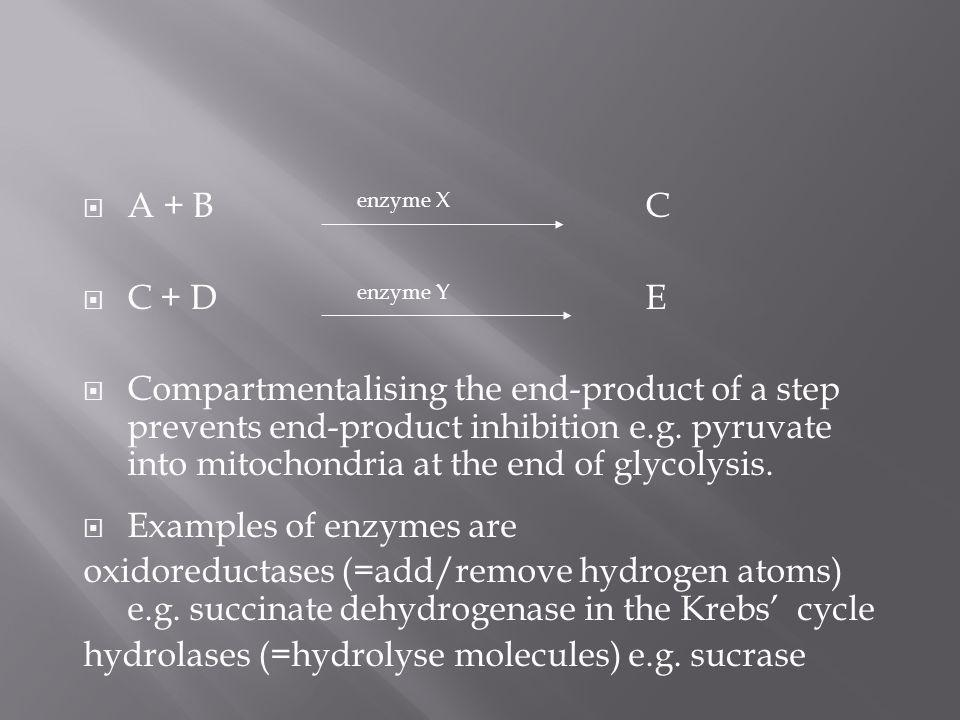 A + B enzyme X C C + D enzyme Y E Compartmentalising the end-product of a step prevents end-product inhibition e.g. pyruvate into mitochondria at the