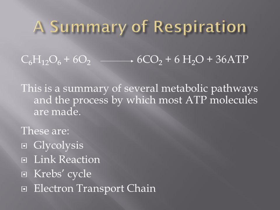 Respiration takes place in 2 distinct phases: The first one does not require oxygen (anaerobic) It only makes a small amount of ATP But does start the splitting of the respiratory substance It is called Glycolysis