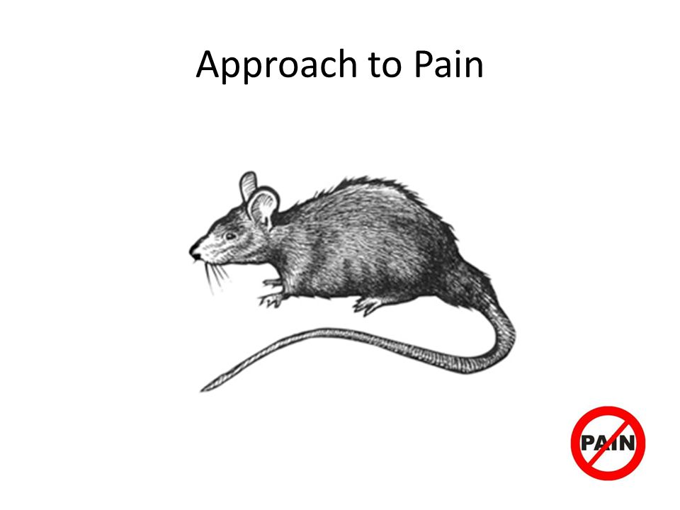 Approach to Pain