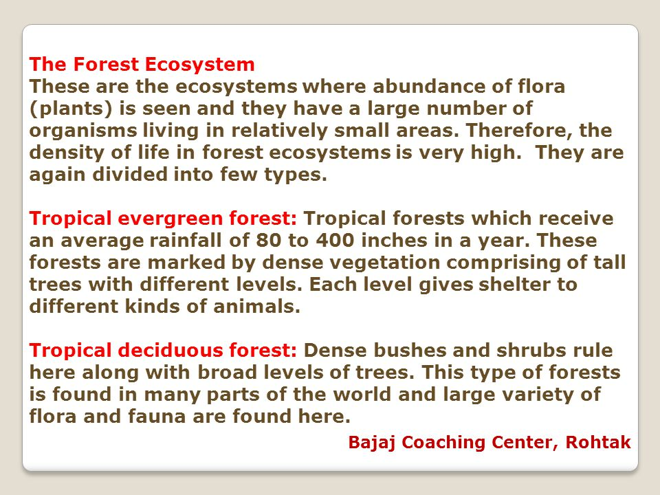 The Forest Ecosystem These are the ecosystems where abundance of flora (plants) is seen and they have a large number of organisms living in relatively