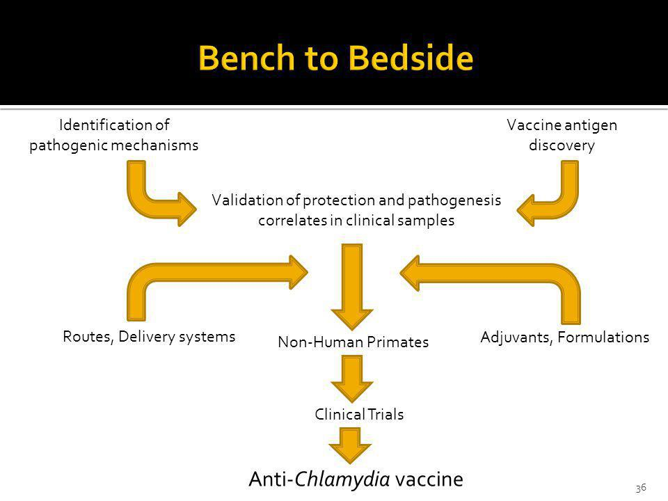 Anti-Chlamydia vaccine Vaccine antigen discovery Identification of pathogenic mechanisms Validation of protection and pathogenesis correlates in clini