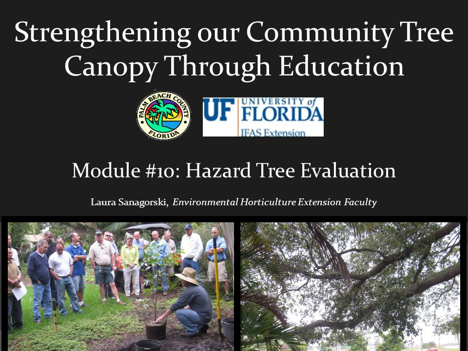Strengthening our Community Tree Canopy Through Education Module #10: Hazard Tree Evaluation Laura Sanagorski, Environmental Horticulture Extension Faculty