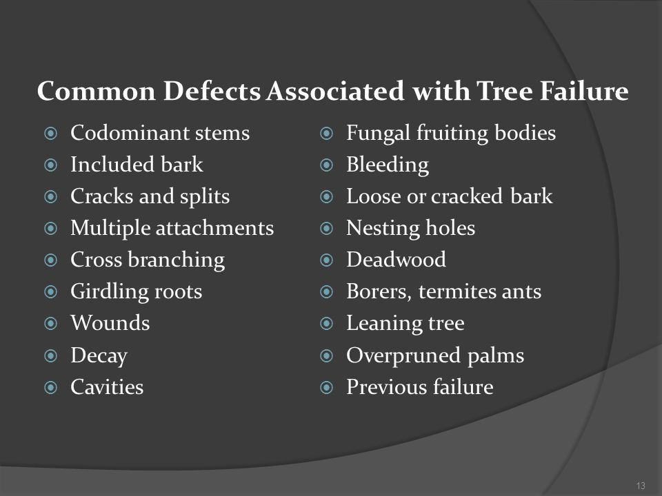 Common Defects Associated with Tree Failure Codominant stems Included bark Cracks and splits Multiple attachments Cross branching Girdling roots Wounds Decay Cavities Fungal fruiting bodies Bleeding Loose or cracked bark Nesting holes Deadwood Borers, termites ants Leaning tree Overpruned palms Previous failure 13
